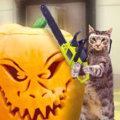 Miniatura de Animales Expertos En Halloween