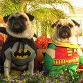 Miniatura de Batman Y Robin Perrunos