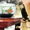 Miniatura de Gatos de Caza