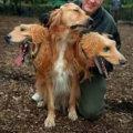 Miniatura de Perro De Tres Cabezas