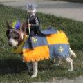 Miniatura de Perros Disfrazados