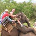 Miniatura de Safari Muy Movido