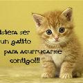 Miniatura de Quisiera Ser Un Gatito