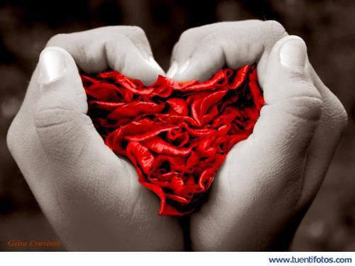 Amor de Corazón De Pétalos