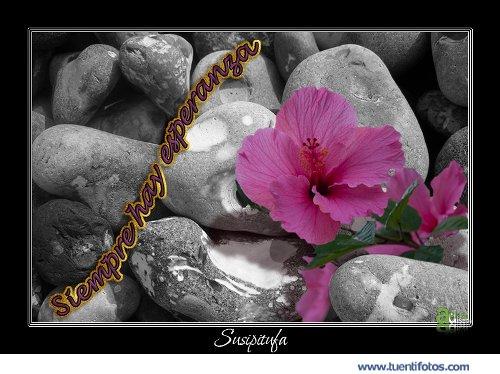 Amor de Florece Incluso en el Pedregal