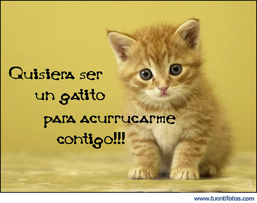 Románticas de Quisiera Ser Un Gatito