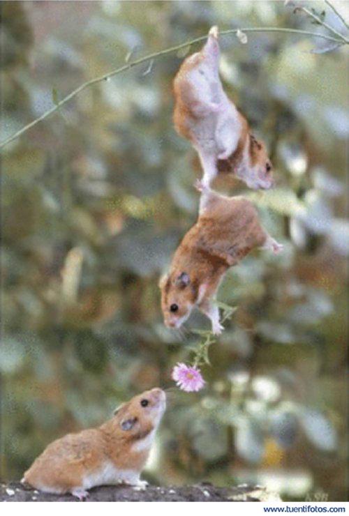 Amor de Ratones Con Flor